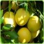 Эфирное масло Грейпфрут на выбор