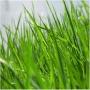 Отдушка косм.Отдушка Скошенная трава 30 мл