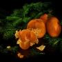 Выгодная цена Спелый мандарин 50 мл