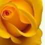 Пищевой краситель водный Желтый 50 мл
