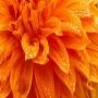 Пищевой краситель водный Оранжевый 50 мл