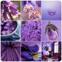 Выгодная цена Пищевой краситель Фиолетовый на выбор