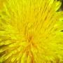 Краситель пигментный Лимонный 15 мл