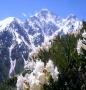Отдушка космет.Альпийские цветы 15 мл