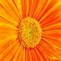 Краситель гелевый Оранжевый