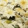 Сухоцвет цветы Хризантемы на выбор