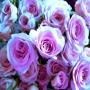Отдушка косм.Свежесрезанная роза 15 мл