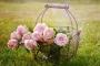 Отдушка концентрат Свежесрезанная роза 10 гр. (США)