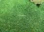 Глиттер (блестки) салатовая голография 10 гр.