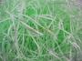 Наполнитель бумажный Нежно-зеленая пастель 50 гр.