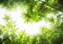 Отдушка космет.Летние листья 30 мл