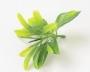 Зелень искусственная Лист самшита