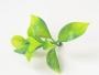 Зелень искусственная Лист самшита №2