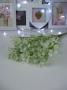 Букет зелени гипсофилы цвет Ассорти