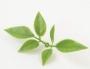Зелень искусственная Лист розы мини